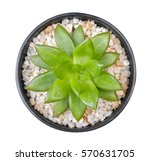 cactus plant in clay pot top... | Shutterstock . vector #570631705