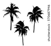 realistic silhouettetropical... | Shutterstock .eps vector #570687946