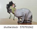 cat breed sphynx gray. champion. | Shutterstock . vector #570701062