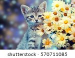 Stock photo cute little kitten sitting near yellow daisy flowers 570711085