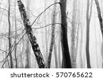 english woodland on a foggy... | Shutterstock . vector #570765622