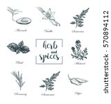 collection of herbs and spices... | Shutterstock . vector #570894112