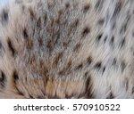 natural lynx fur   Shutterstock . vector #570910522