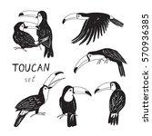 toucan bird graphic set | Shutterstock .eps vector #570936385