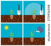 transplant seedlings to a... | Shutterstock . vector #570956548