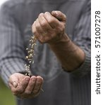 farmer pouring grain from one... | Shutterstock . vector #571007278