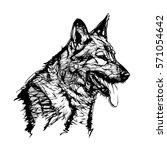 german shepherd dog vector... | Shutterstock .eps vector #571054642