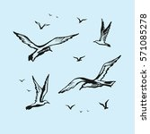 Seagulls Vector Sketch Drawing...