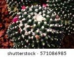 cactus desert plant for... | Shutterstock . vector #571086985