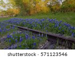 railside wildflowers | Shutterstock . vector #571123546