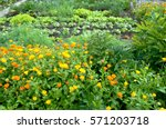 Marigold And Different...