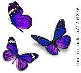three monarch butterfly ...   Shutterstock . vector #571254376