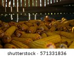 corn in old storage | Shutterstock . vector #571331836
