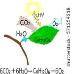 chemical reaction of... | Shutterstock .eps vector #571354318