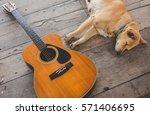 Dog Sleeping With Guita