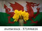Daffodils In Front Of Welsh...