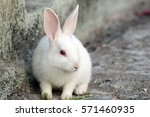 Stock photo baby rabbit 571460935