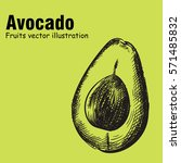 hand drawn avocado isolated on... | Shutterstock .eps vector #571485832
