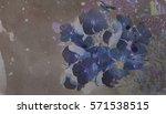 romantic flower background.... | Shutterstock . vector #571538515