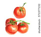 tomato with stem watercolor... | Shutterstock . vector #571577152