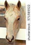 Small photo of Horse Head