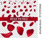 rose petals. vector...   Shutterstock .eps vector #571593466