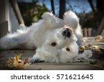 Stock photo funny dog 571621645