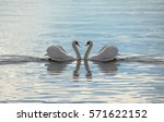 Love swans   swans making a...