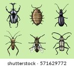 big set of insects bugs beetles ... | Shutterstock .eps vector #571629772