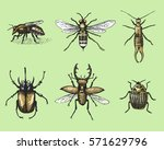 big set of insects bugs beetles ... | Shutterstock .eps vector #571629796