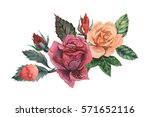 hand painted watercolor... | Shutterstock . vector #571652116