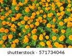 flower on background | Shutterstock . vector #571734046
