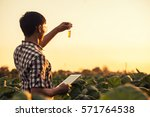 farmer researching plant in... | Shutterstock . vector #571764538