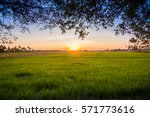 sunset time at rice filed.   Shutterstock . vector #571773616