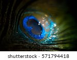 colorful feather peacock with... | Shutterstock . vector #571794418