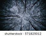 Misty forest with dense fog - stock photo