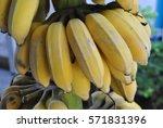 yellow banana  | Shutterstock . vector #571831396