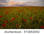Spring Meadow Of Blooming Red...