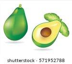 avocado vector | Shutterstock .eps vector #571952788