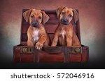 Drawing Puppies Rhodesian...