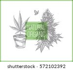 buds and leaves of cannabis... | Shutterstock .eps vector #572102392