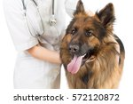 Stock photo shepherd dog examination by veterinary doctor isolated 572120872