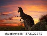 Mother Kangaroo With Joey In...