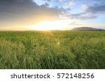 sunset at a paddy field in... | Shutterstock . vector #572148256