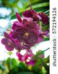 close up orchids and bokeh...   Shutterstock . vector #572194126