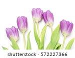 bunch of purple tulips on white | Shutterstock . vector #572227366