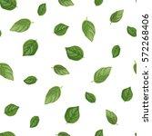 basil seamless pattern. organic ... | Shutterstock .eps vector #572268406