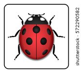 ladybug small icon. red lady... | Shutterstock .eps vector #572290582