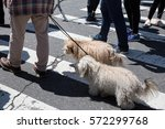 Stock photo animals and their owners on the streets of the big city the dogs on the streets of nyc 572299768