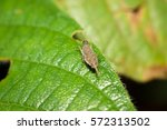 small insect | Shutterstock . vector #572313502